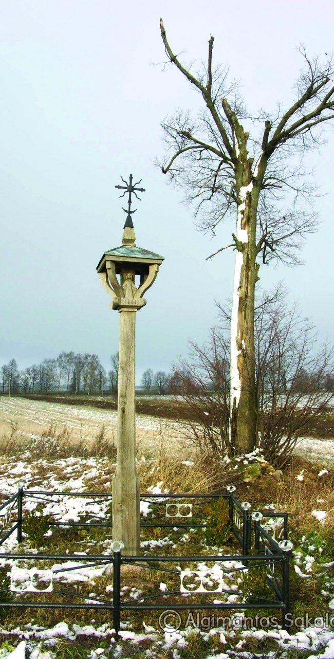Stogastulpis gimtinei. H=3,6 m, ąžuolas. Dailučių km., Vilkaviškio raj., 2006 m.